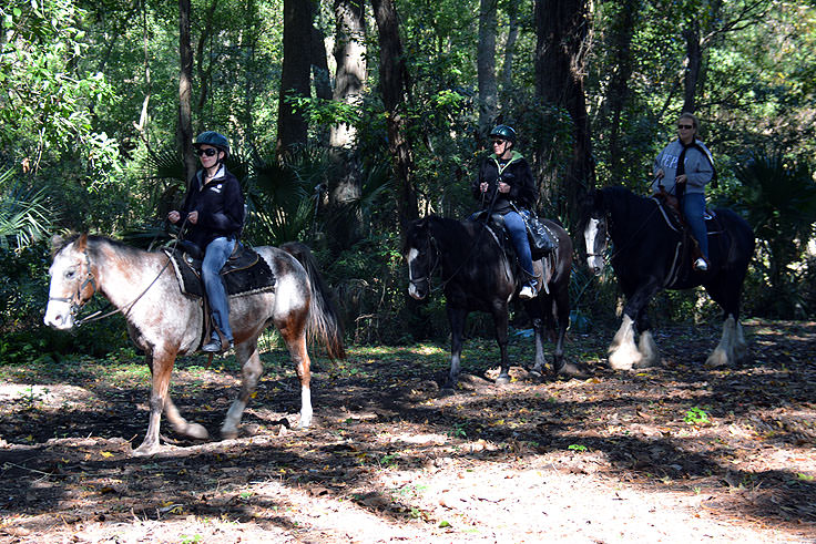 Horse rides through Sea Pines Forest Preserve in Hilton Head, SC